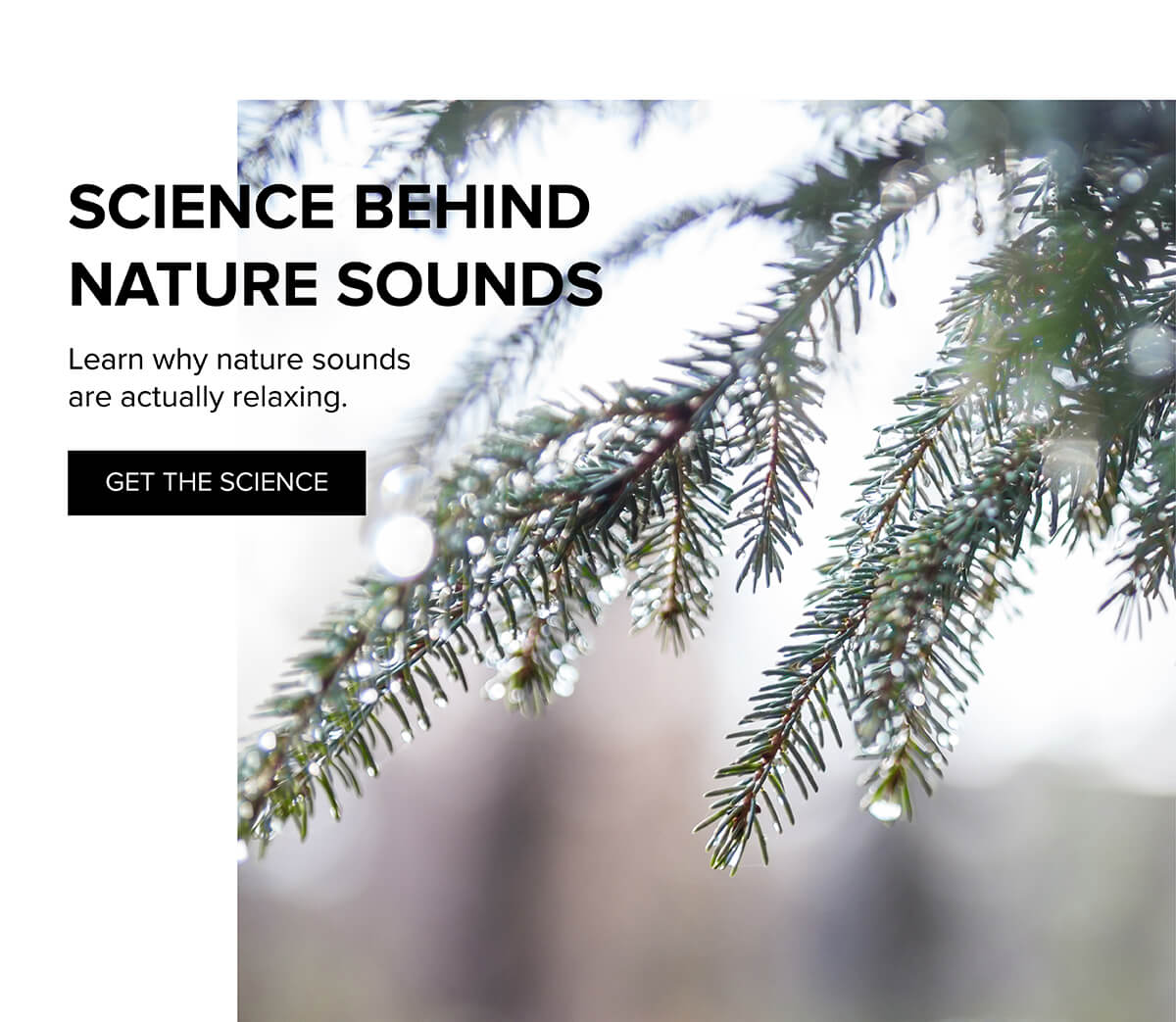 Science behind nature sounds